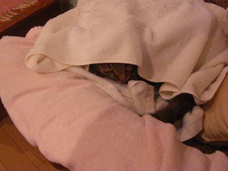 ふて寝のマロン?1