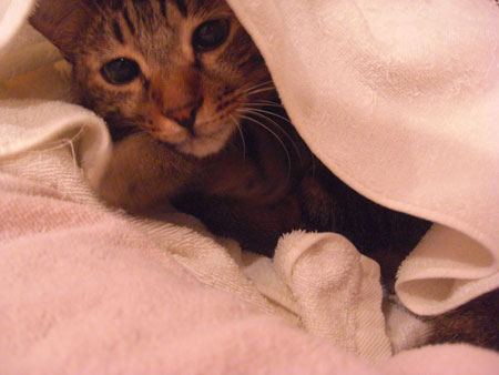 ふて寝のマロン?3