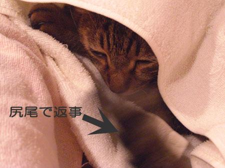ふて寝のマロン?6
