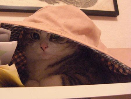 帽子 その2 1
