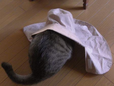 マロンと帽子3