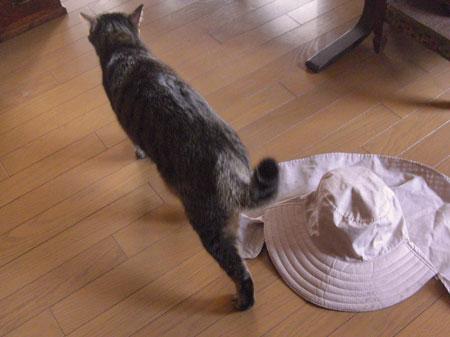 マロンと帽子4
