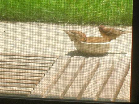 小鳥さん、待ってるの7