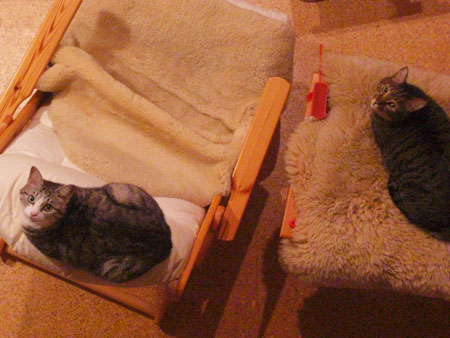 お気に入りの寝場所1