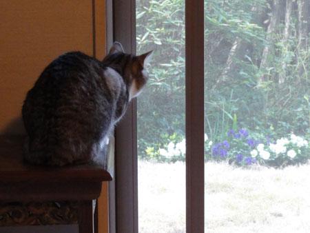 窓辺のナナ1