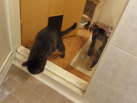バスルームは面白い4