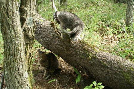 裏山の松の木8