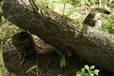 裏山の松の木9