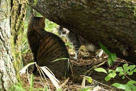 裏山の松の木10