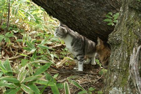 裏山の松の木11