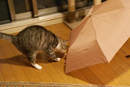 ナナと傘1