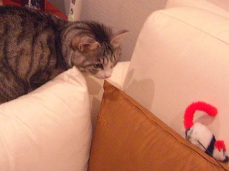 ソファの上のネズミ2
