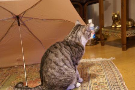 ナナと傘3
