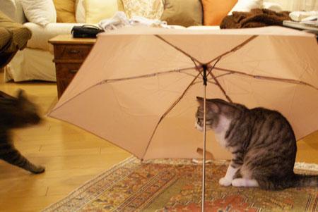 ナナと傘5