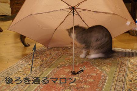 ナナと傘7