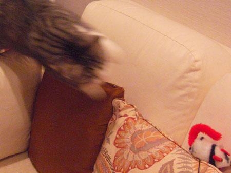 ソファの上のネズミ8