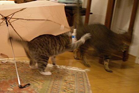 ナナと傘9