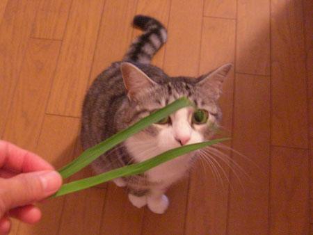 草、大好き1