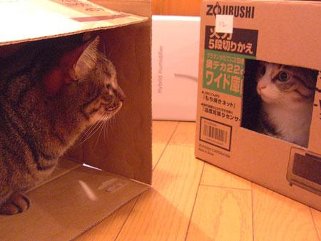 段ボール箱のお家3