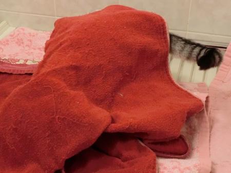 ナナの寝床5