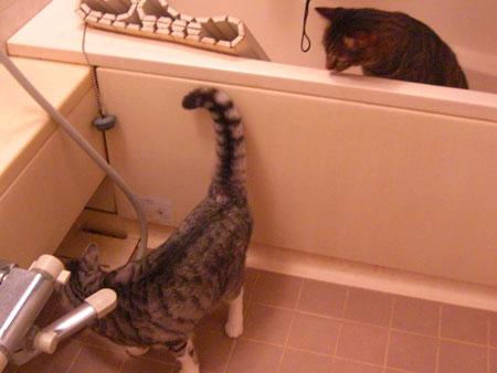 バスルームで2