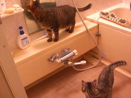 バスルームで4