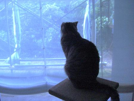 台風の朝8