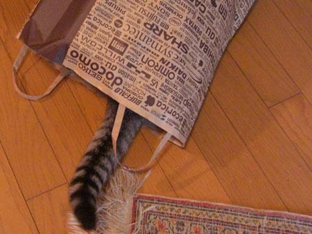 ナナは紙袋が好き3