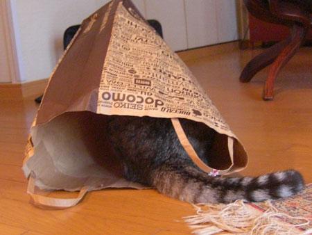 ナナは紙袋が好き4