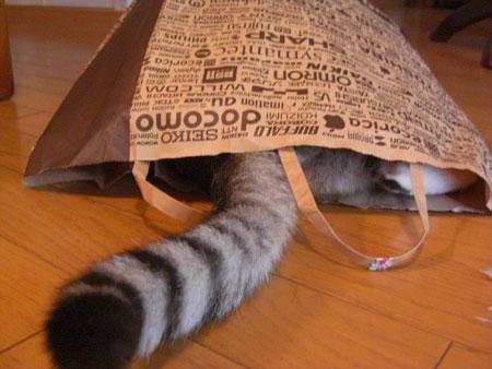 ナナは紙袋が好き5