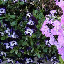 flowers1.jpg
