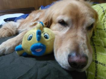 ポヨヨンと一緒におやすみなさーい。。。