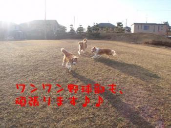 ワンワン野球部♪