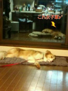 お疲れ様~~(*^_^*)