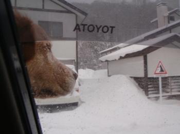 車で雪を楽しむナナ
