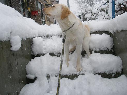 大雪の日階段