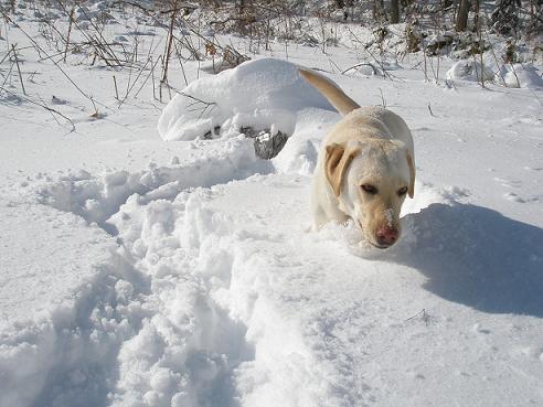 雪遊び1月