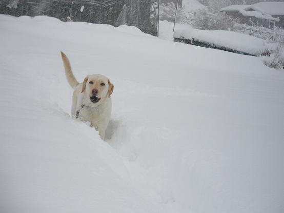 雪深し2009