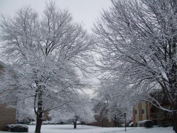 また、また、雪