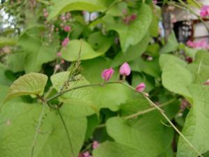 090814002 flower