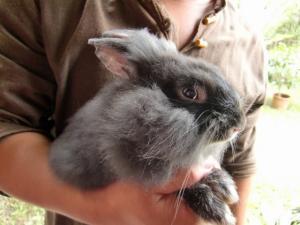 090814012 rabbit