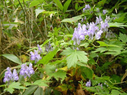 2009_0909AY.jpg
