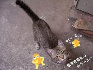 一応若手01