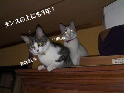 棚の猫01