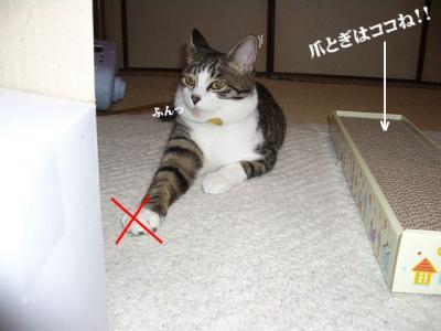 棚の猫02