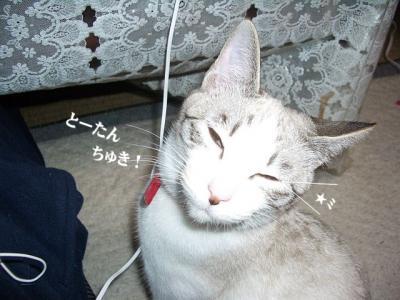棚の猫03
