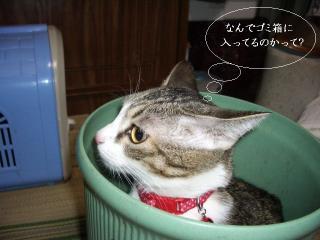 ごみ箱な女01