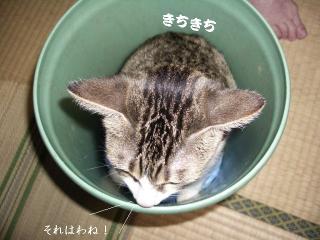 ごみ箱な女02