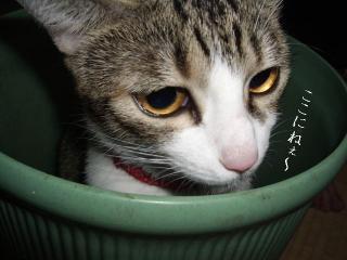 ごみ箱な女03