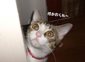 草の者な猫02